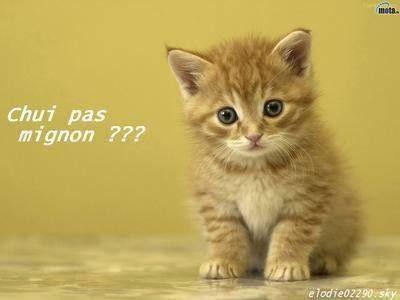 Les chats - Page 5 A817862e